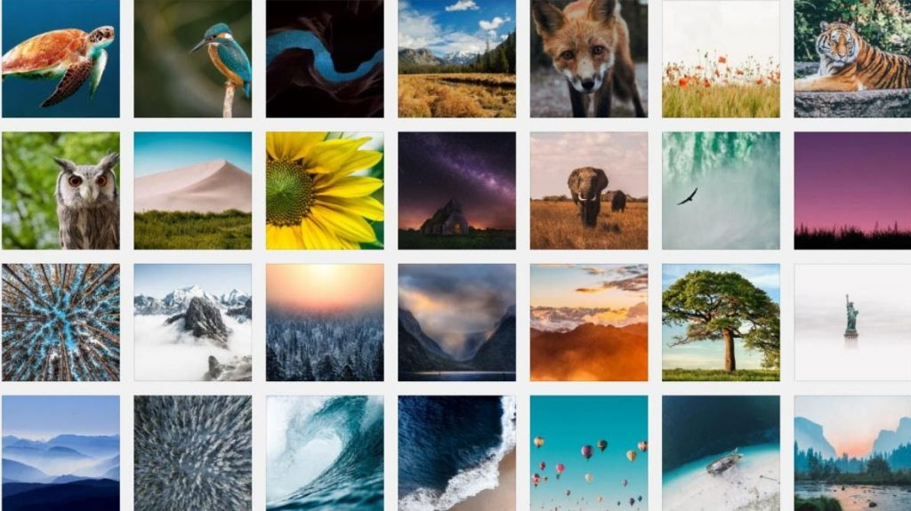 how to add images to your wordpress table
